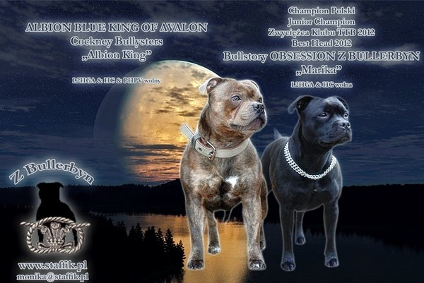 PUPS STAFFORDSHIRE BULL TERRIER 2014